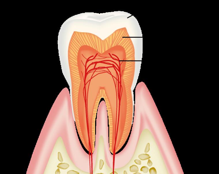 矯正治療中に歯がしみる?知覚過敏と対処法